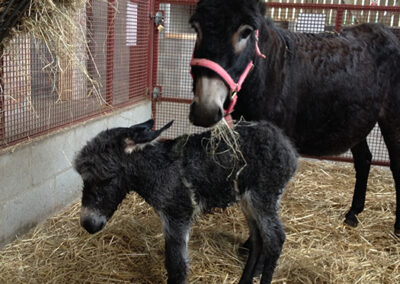 mother and baby donkey